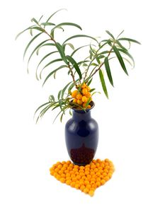 Free Vase With Branch Of Buckthorn Berries Royalty Free Stock Image - 6716276