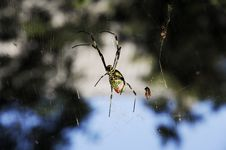 Free Spider Royalty Free Stock Photo - 6716355