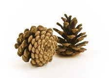 Free Pine Cones Royalty Free Stock Photos - 6717148