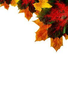 Free Autumn Corner Stock Photo - 6718390