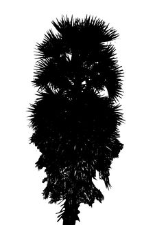 Free Silhouette Palm Tree Royalty Free Stock Image - 6718606
