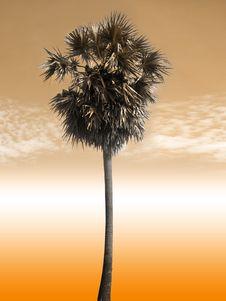 Free Palm Tree Royalty Free Stock Photos - 6718638