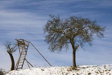 Free Appel Tree And High Seat Stock Photography - 6718682
