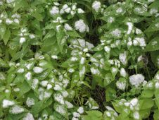 Free Snow On A Nettle Royalty Free Stock Photo - 6719045