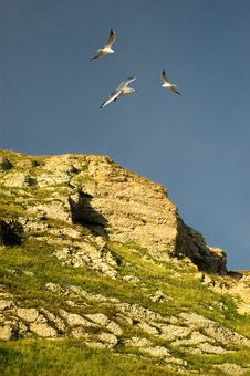 Free Seagulls Flying Above A Rockface. Royalty Free Stock Photography - 6719187