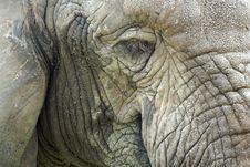 Free Close Up Of A Elephant Head Stock Images - 6719314