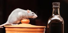 Free Rat In Kitchen Royalty Free Stock Photos - 6719428
