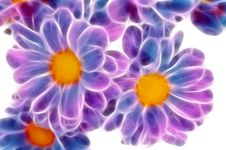 Free Daisies. Stock Images - 6719444