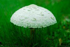 Free Mushroom Royalty Free Stock Photo - 6719505