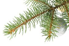 Free Fir Tree Branch With Decoration Royalty Free Stock Photography - 6719637