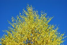 Free Yellow Tree Stock Photos - 6719843