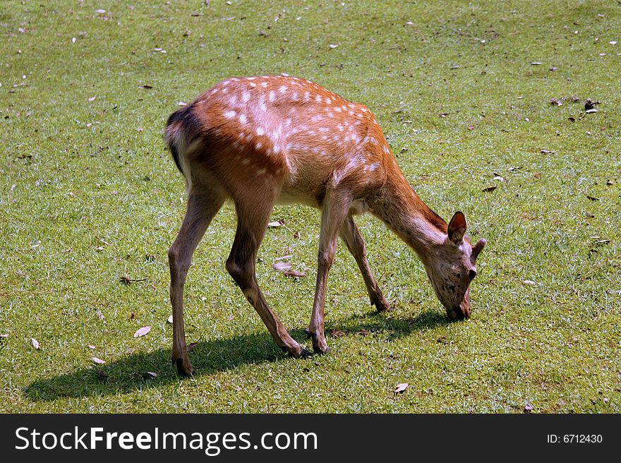 Deer s lunch time