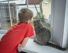 Boy And A Cat Looking Out The Window Royalty Free Stock Photos