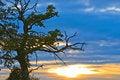 Free Sundown Tree Stock Photos - 6725543