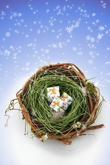 Free Nature S Holiday Presents Stock Image - 6720421
