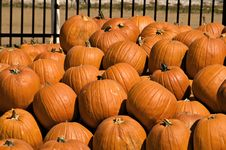 Free Pumpkins Stock Photo - 6720580