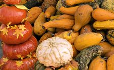 Free Pumpkins And Gourds Stock Photo - 6720610