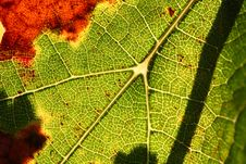 Free Vineyard Background Royalty Free Stock Photos - 6721688
