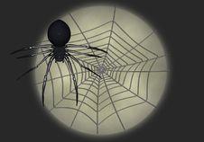 Black Widow Illustration 5 Stock Photo