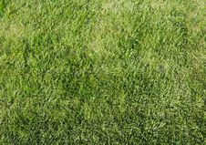 Free Grass Stock Image - 6722311