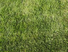 Free Grass Stock Photography - 6722312