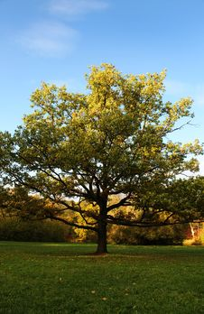 Free Standalone Tree Royalty Free Stock Photos - 6723398