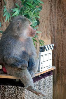 Free Baboon Stock Image - 6723651