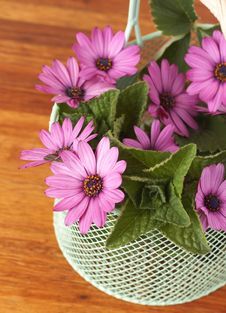 Free Beautiful Pink Daisies And Leaves Royalty Free Stock Photos - 6723848