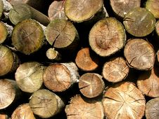 Free Stack Of Firewood Stock Image - 6724961