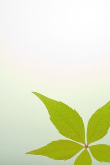 Free Green Leaf Background Stock Photos - 6725343