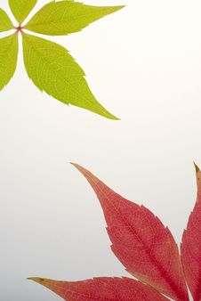 Free Green And Red Leaf Background Royalty Free Stock Photos - 6725488