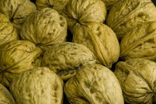 Free Walnut Texture Stock Photo - 6725560