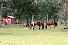 Horses And Barn Stock Images