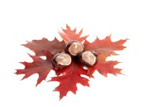 Three Chestnuts And Leaves. Stock Photo