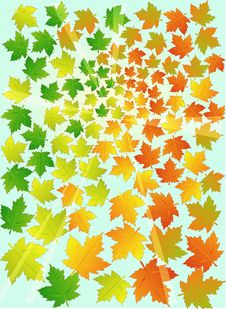 Free Autumn Maple Leafs Royalty Free Stock Photography - 6728167