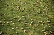 Free Autumn Leaves On Grass Stock Photography - 6728372