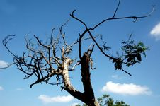 Free Dry Tree In Sillhoute Stock Photo - 6728430