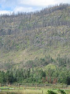 Free Mountain After A Forest Fire Stock Photos - 6728463