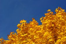 Free Autumn Leaves Royalty Free Stock Image - 6728466