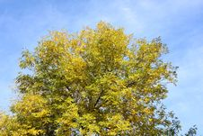 Free Leaf Stock Photo - 6728580