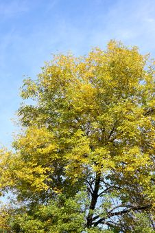 Free Leaf Stock Photo - 6728590