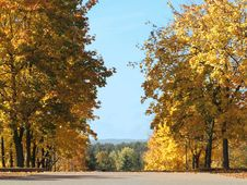 Free Golden Autumn Stock Image - 6728741