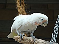 Free Curious  Parrot On A Branch Stock Photo - 6729160