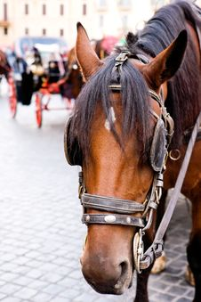 Horse And Carriage At Piazza Di Spagna Stock Image