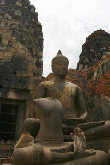 Free Buddha And Monkey Royalty Free Stock Photography - 6729677