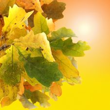 Free Autumn Leaves Background Royalty Free Stock Images - 6729699