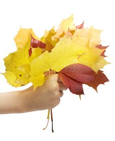 Free Autumn Leafs Royalty Free Stock Photos - 6729948