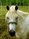 Free Horse Royalty Free Stock Image - 6736016