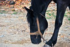 Free Black Horse Stock Photography - 6731742
