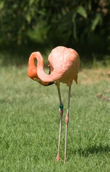 Free Pink Flamingo Royalty Free Stock Photography - 6733097